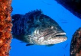العاب صيد و قنص الاسماك بالبنادق البحرية